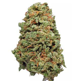 Hawaiian Haze Marijuana